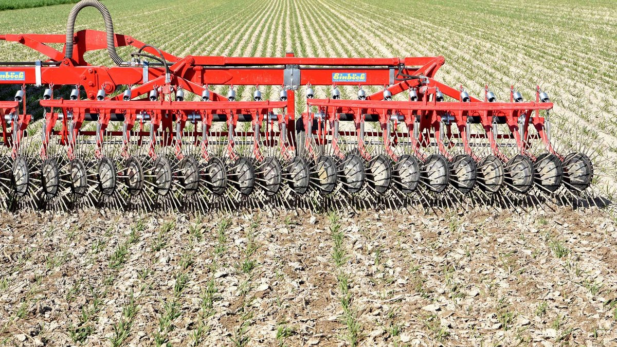 Cultivating Feed